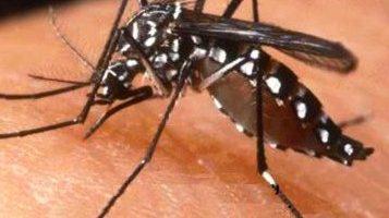 Picaduras y Mordeduras de Insectos